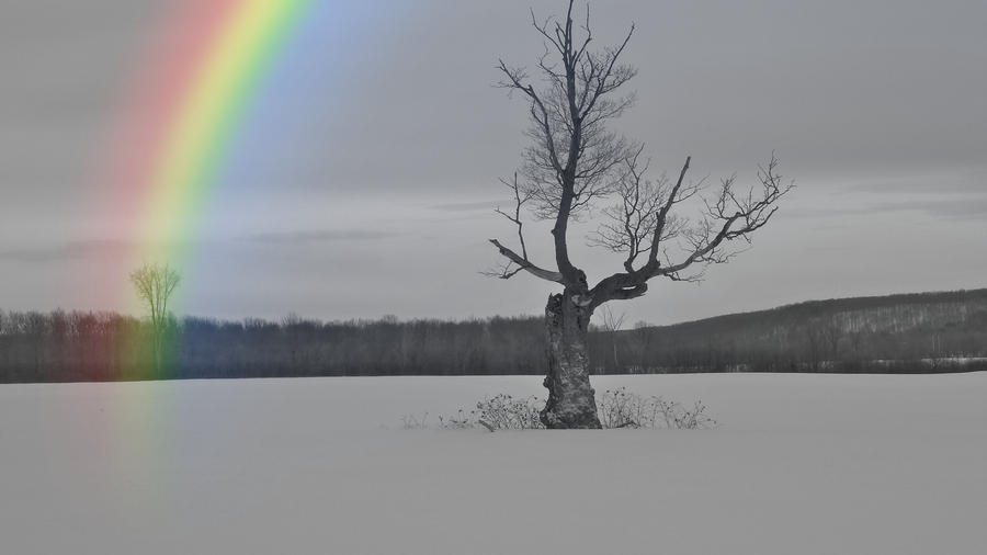 black-and-white-rainbow-timothy-thornton