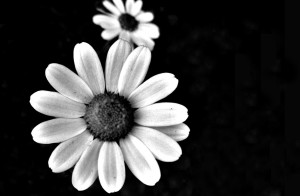 exotic-flower-pics-black-and-white
