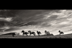rinning_horses_print_black_and_white_ireland